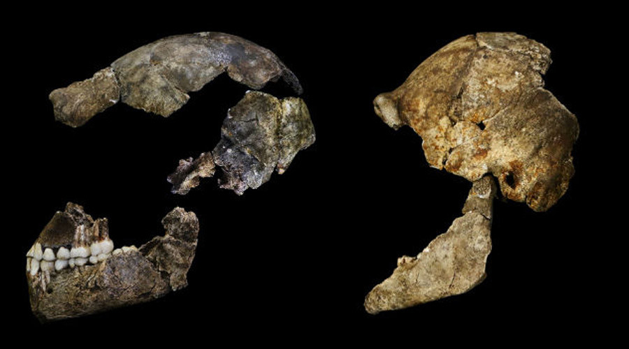 'Tiny brain, slender body': New human-like species discovered in S. African cave