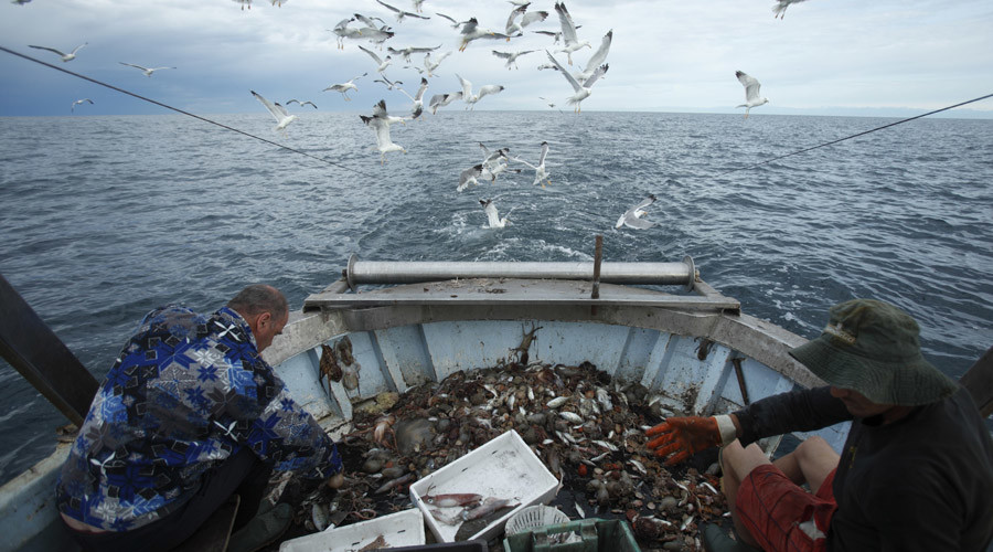 Plenty of fish in the sea? Half of ocean life died out in 45 years – report