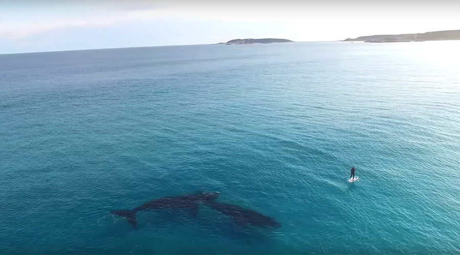 Hard to 'Imagine': Paddle boarding with whales (VIDEO)