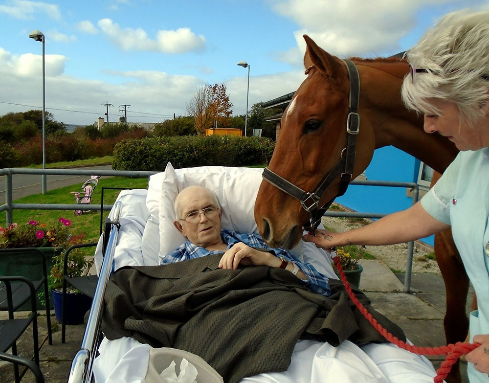A horse was taken to hospital to visit its dying owner one last time