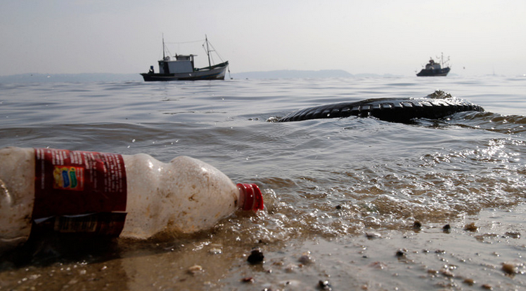 Plastic on menu: Study shows alarming quantities of human made-debris in fish