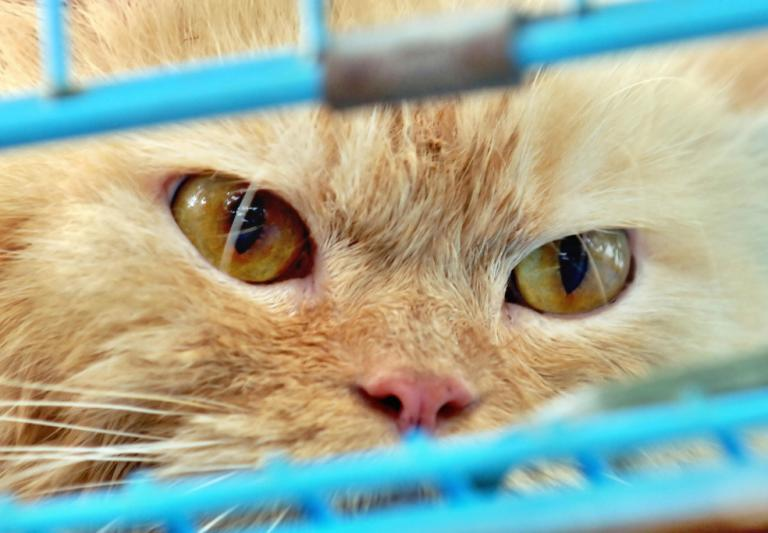 Australia plans to kill two million feral cats. Before you get mad, hear them out