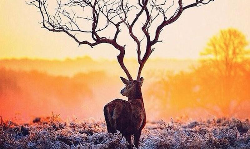 deer-0-620x