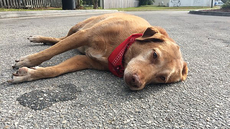 Loyal dog found lying in the road where owner was killed