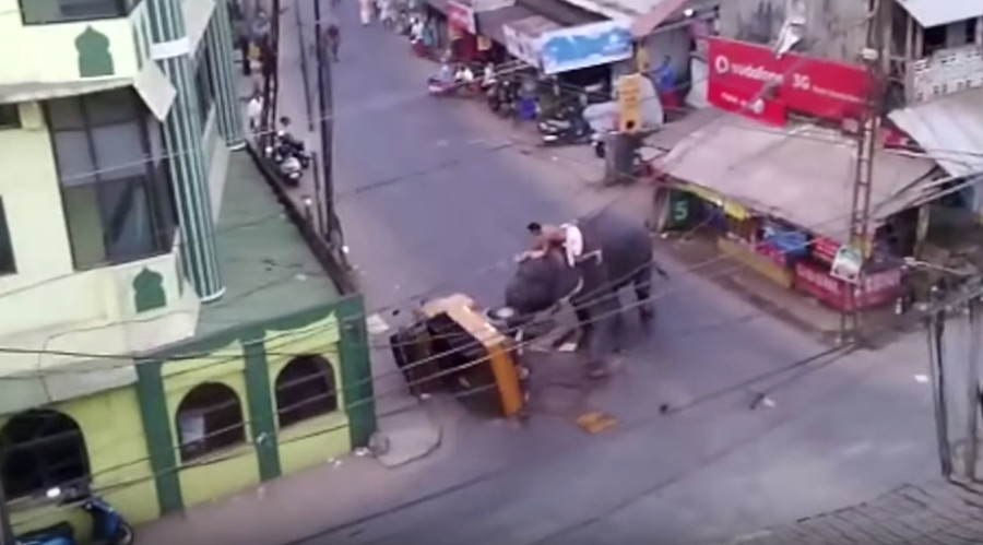 lephant rage: Stressed 'Nelly' stomps Indian rickshaw (VIDEO)