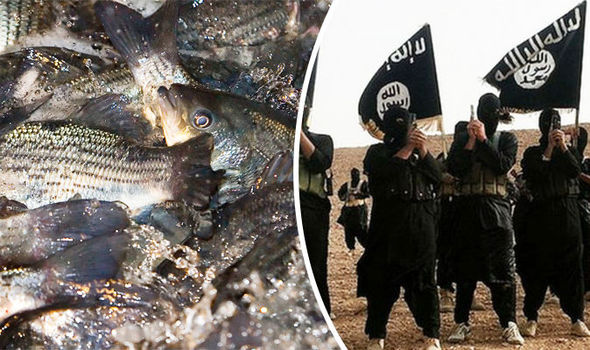Now Islamic State is running FISH FARMS in desperate attempt to make money