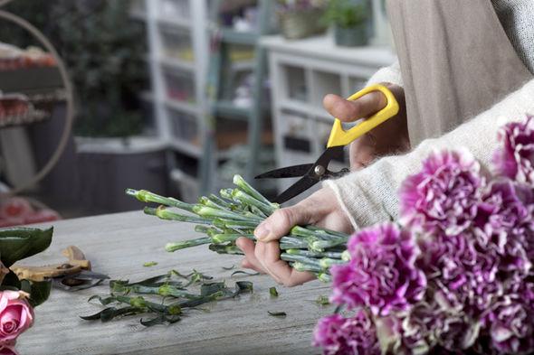 cut-flowers-525326