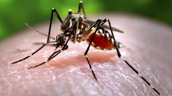 Zika outbreak fuelled by mosquito control failure, says WHO boss