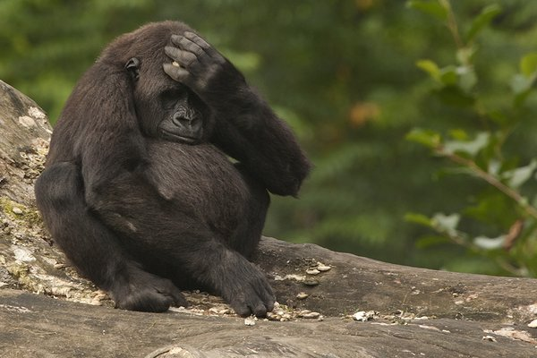In gorilla's death, critics blame mother, Cincinnati Zoo