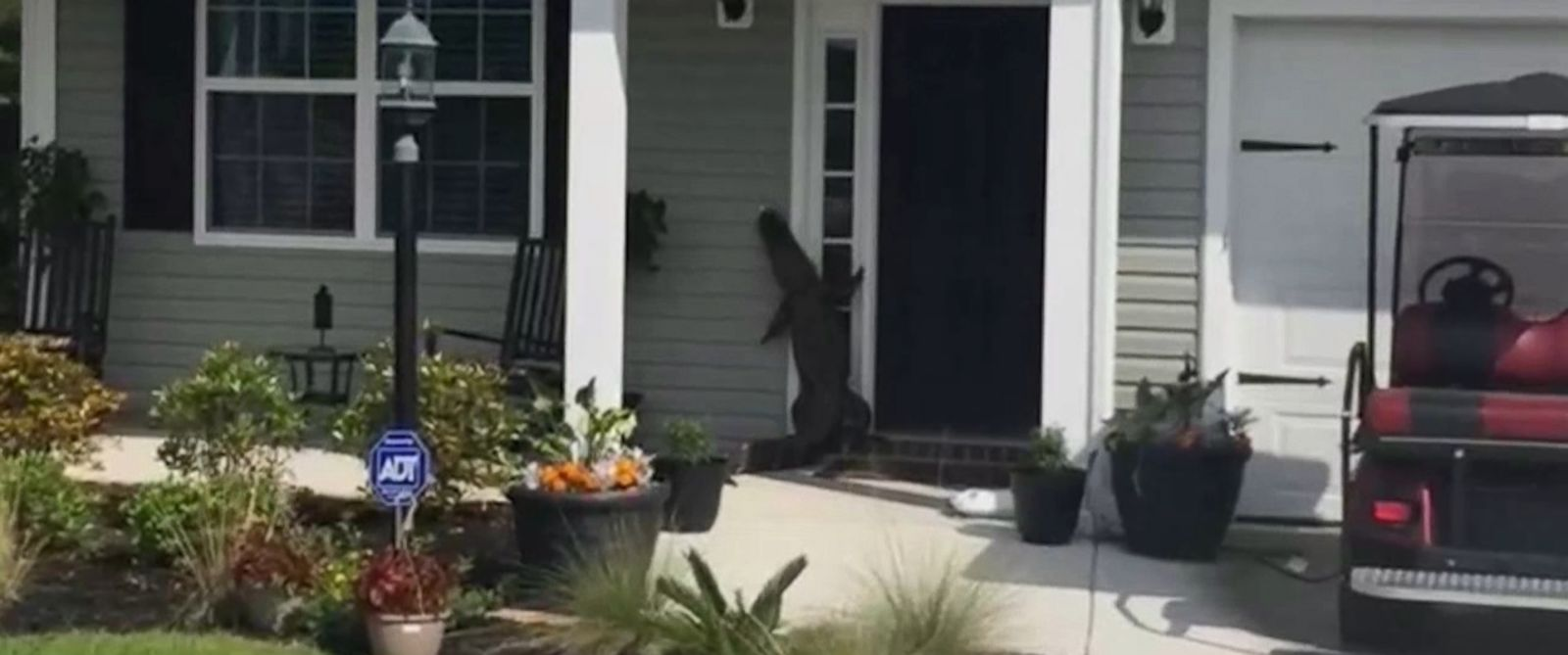Alligator Caught on Video Attempting to Ring Doorbell of South Carolina Home