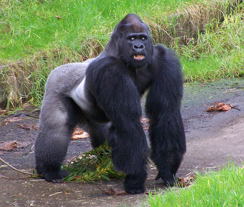 Parents of child who fell into gorilla enclosure get death threats after animal shot dead