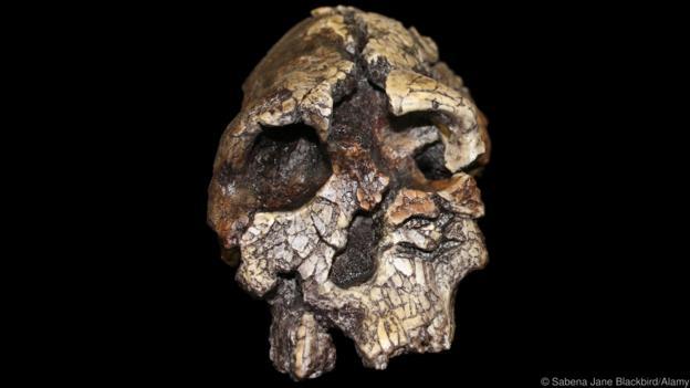 D0E57D Kenyanthropus platyops