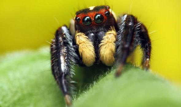 spider-527123