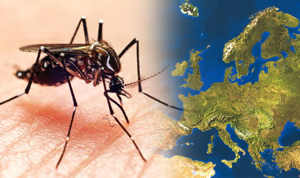 Holiday alert to families as Zika heads for Europe