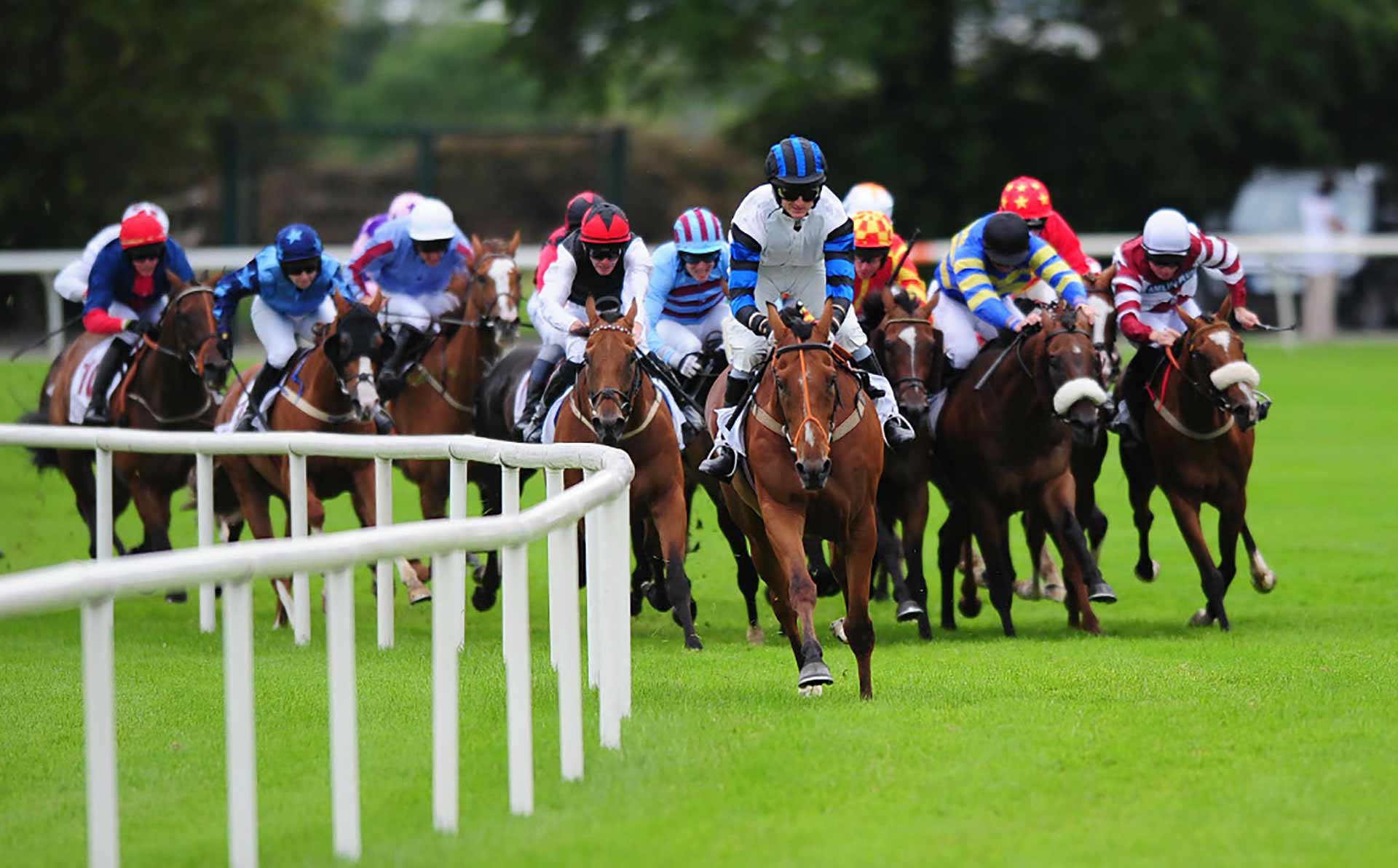 Horse Racing Ireland nominations have been announced