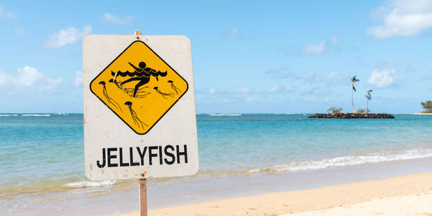 Deadly jellyfish moving south towards popular Queensland tourist spots