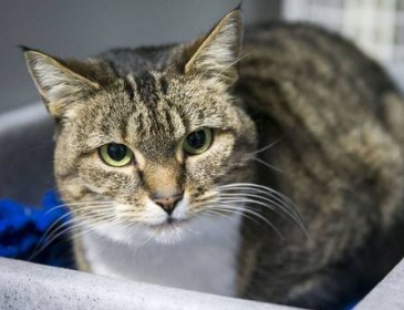 Would-be cat owners urged to consider adopting older felines
