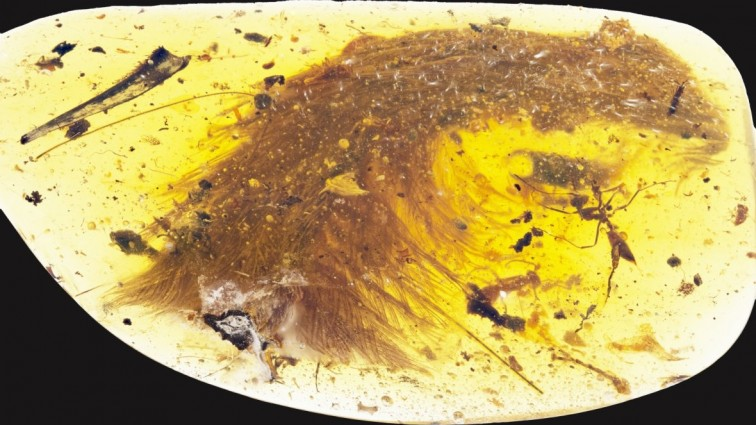 Dinosaur tail complete with feathers trapped in amber discovered at Myanmar marketplace