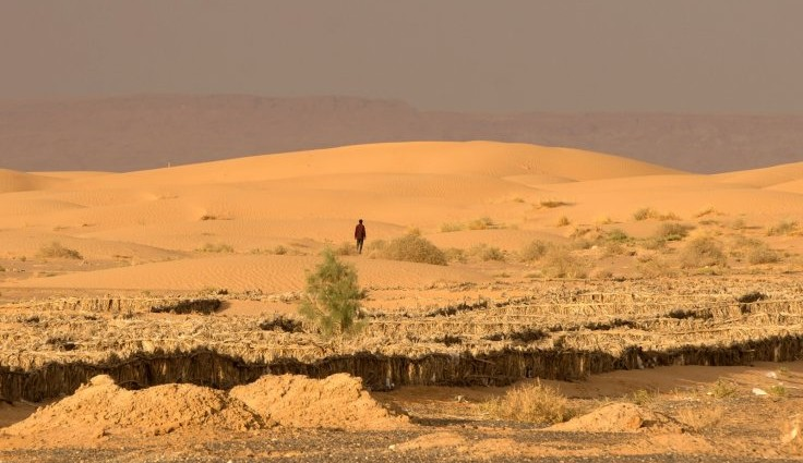 The Sahara Desert used to be lush and full of vegetation – researchers find clues to what killed it