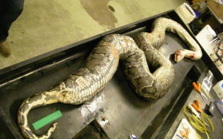snake1-large_trans-rkov1yyzwui_u9sfyf5nztrsloprmjsl_p-syueryem