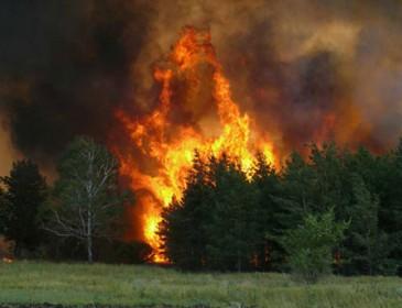 В Португалии растет число жертв лесных пожаров