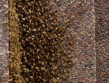 20 тысяч пчёл захватили офис в небоскребе на Манхэттене