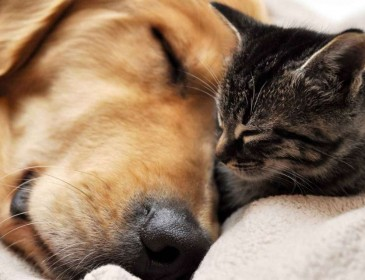 Собака и умирающая кошка: Эта история разобьет вам сердце!
