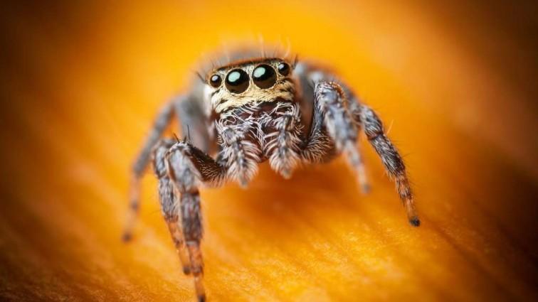 «Паук захватил в заложники мою почту!» : Жилец попросил почтальона спасти его от наглого паука