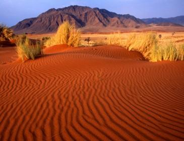 Необычное явление: самая сухая пустыня в мире зацвела