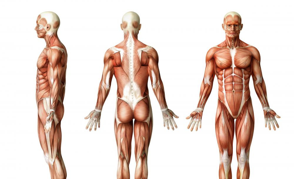 facts-about-human-body-e1484857979698