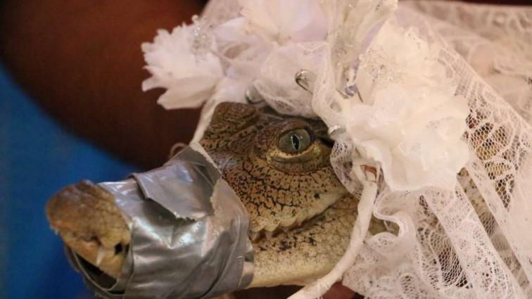 Мэр мексиканского города женился на крокодиле! Такого вы еще не видели…