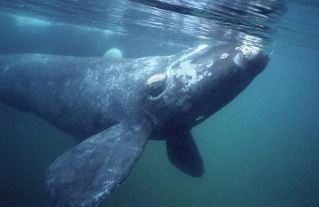 Нельзя спасти: в РФ китенок погибает на глазах у туристов (фото)