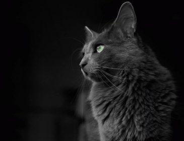 Против барселонских террористов «направили» армию котов (фото)