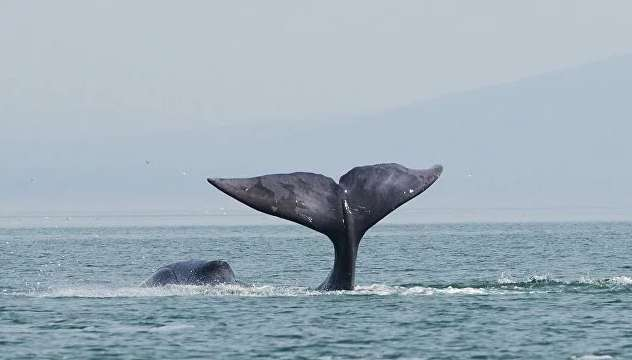 Ночью был сильный прилив: чем закончилась драматическая история спасения кита (фото)