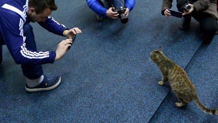 Фотограф показал котов такими, какими их не видел никто