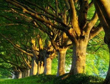 Деревья «научат» расти вдвое быстрее