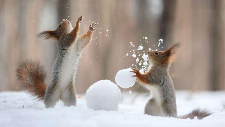 Как слепить прочного и красивого снеговика