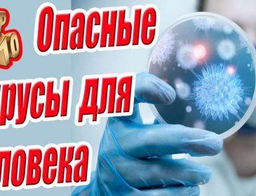 Топ 10 опасных вирусов для человека