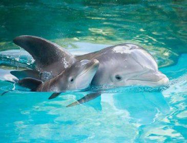 Ученые рассказали чему люди могут научиться у дельфинов