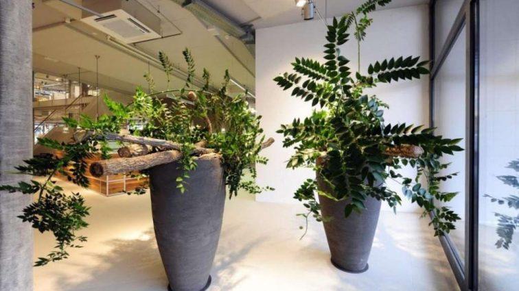 Лучшие комнатные растения для офиса