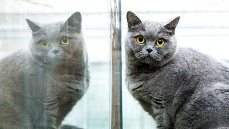 «Был ее любимцем»: женщина оставила огромное наследство..коту