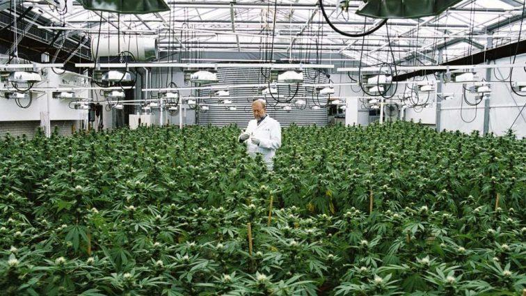 Легендарный боксер приобрел участок для выращивания марихуаны