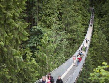 Страшная катастрофа: в результате обрушения моста погибли около 10 человек