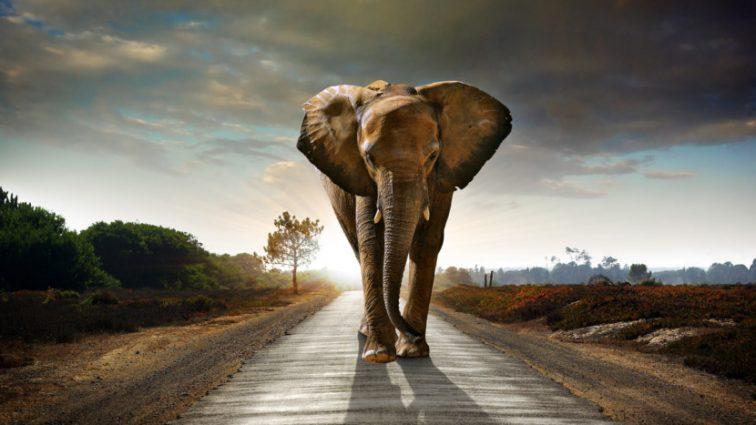 «Опасная работа»: слон сбросил с себя двух мужчин и начал топтать