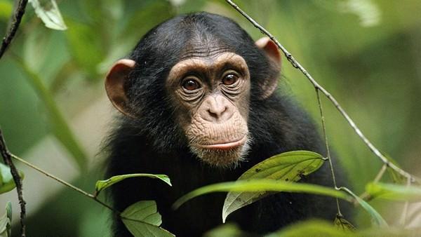 Не удалось спасти сына: обезьяна убила ребенка