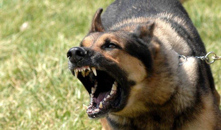 Убийственный укус: домашний пес загрыз насмерть семимесячного младенца