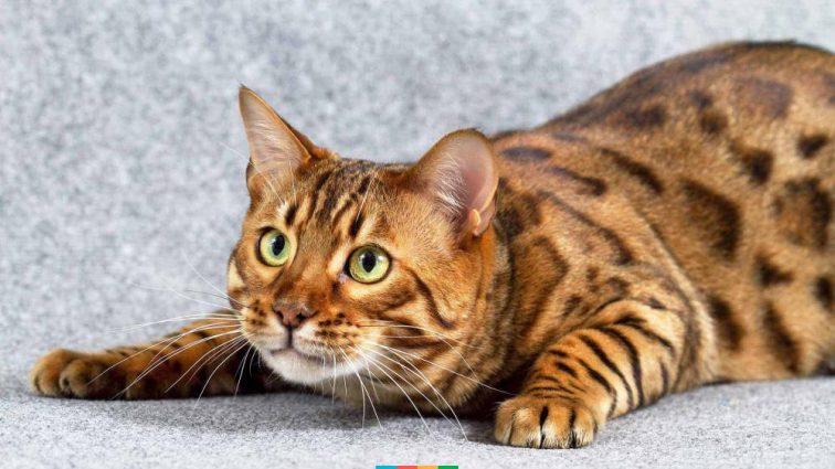 Сын жестоко убил мать-пенсионерку из-за…кота