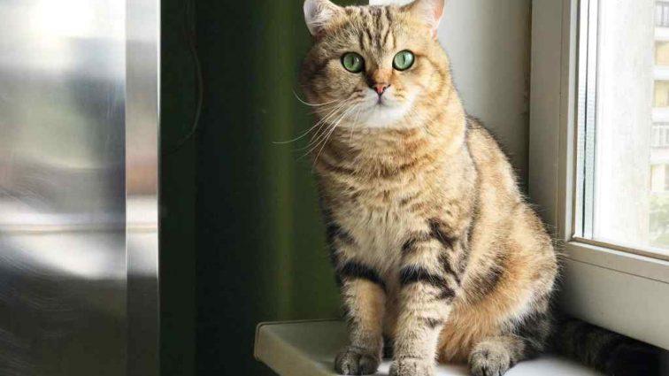 Женщина оставила своему коту наследство 1,5 миллиона евро