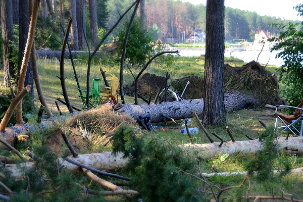 «Во время урагана»: В Польше дерево убило заместителя мэра