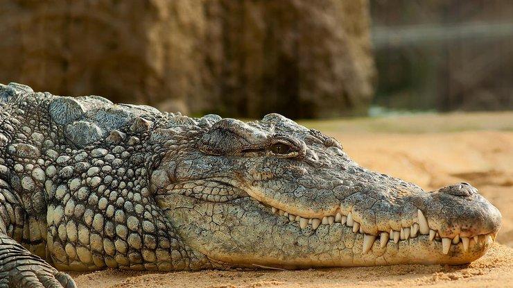 Крокодил съел священника во время крещения: узнайте подробности